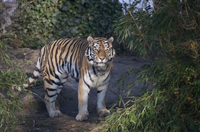 Neulich beim Spaziergang mit dem Maharaja