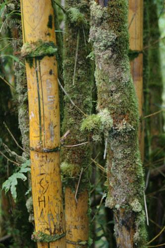 Neulich im Regenwald