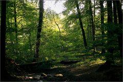 Neulich, im Wald (02)