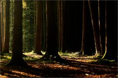 Neulich, im Wald...