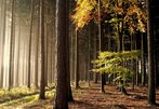 neulich im Wald...