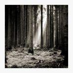 -- Neulich im Wald --