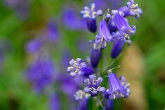 Neulich im Wald der Blauen Blumen