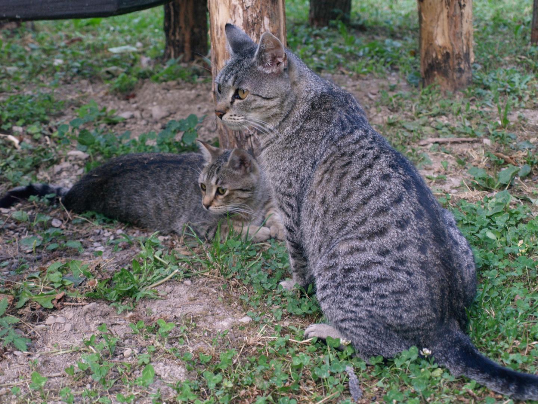 """neulich meine beiden kleinen Freunde in der """"Katzenschule"""""""