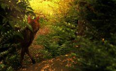 neulich morgens im Wald