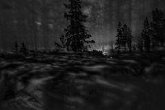Neulich nachts im Wald.....