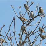 neun kleine sperlinge...