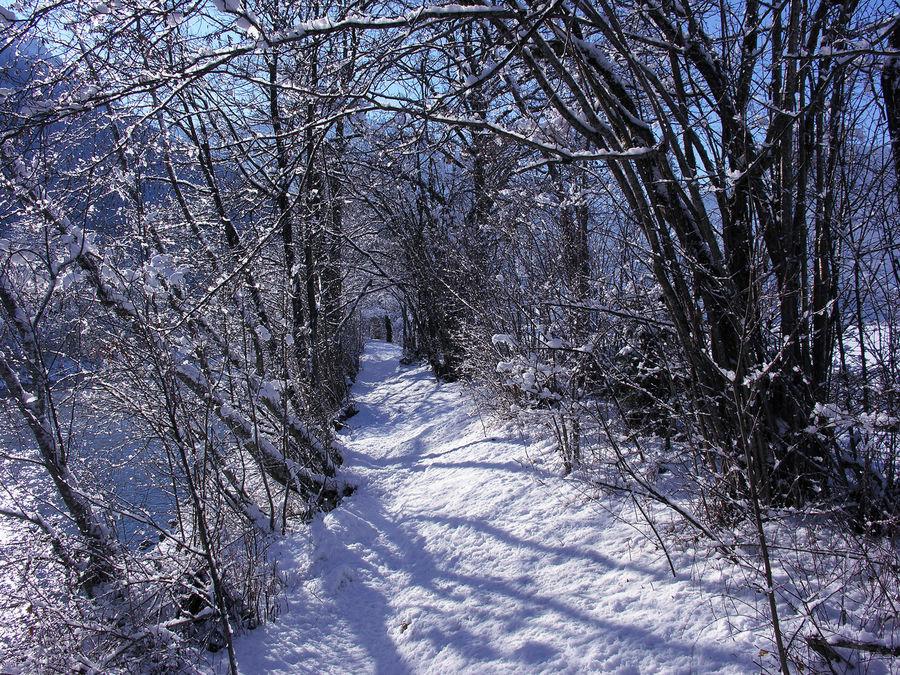 Neuschnee auf meinem Joggingweg