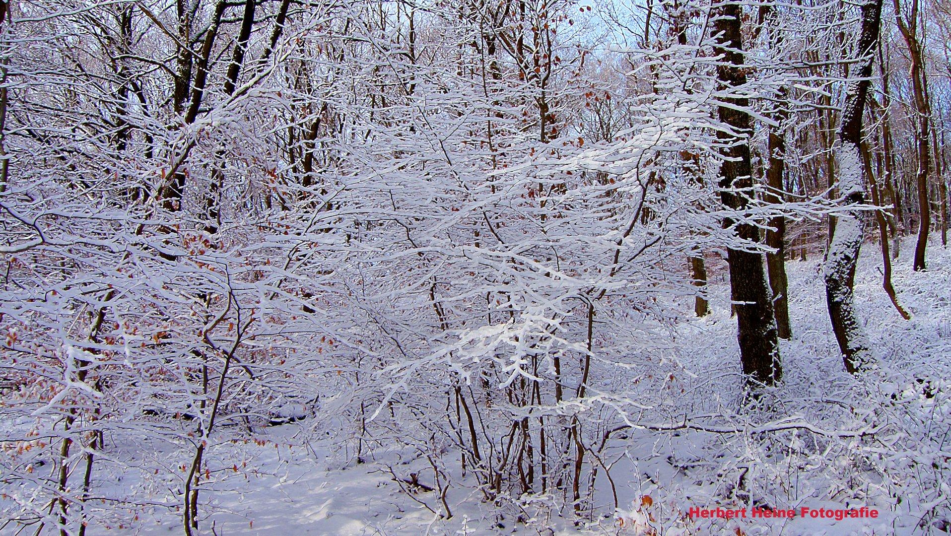 Neuschnee - Strukturen, im Wald...