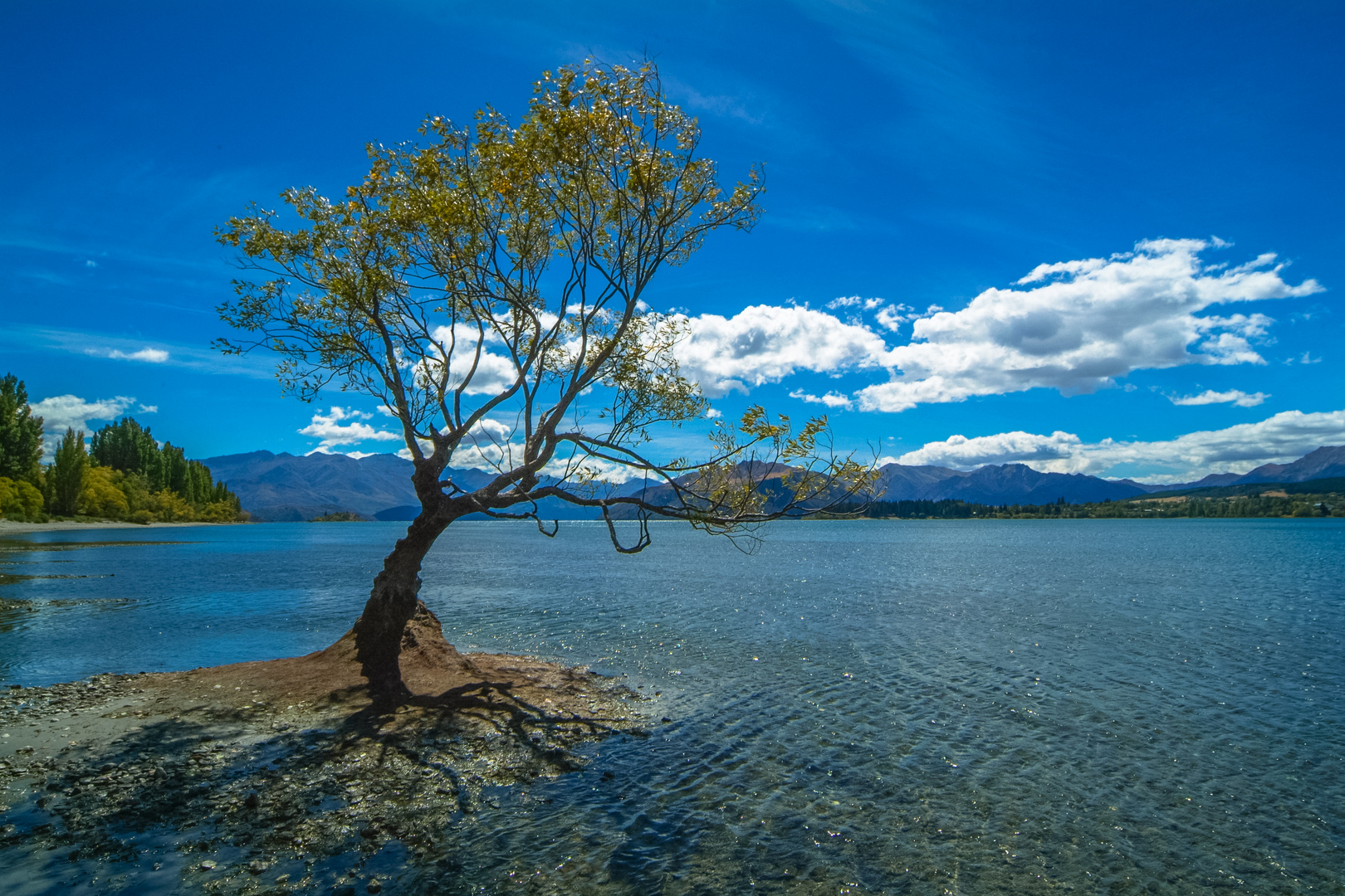 Moschee Neuseeland Video Pinterest: Neuseeland 2006: Südinsel, Einsamer Baum Am Lake Wanaka