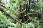 Neuseeland: Im Land der Hobbits