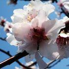 neustadter 'flower'