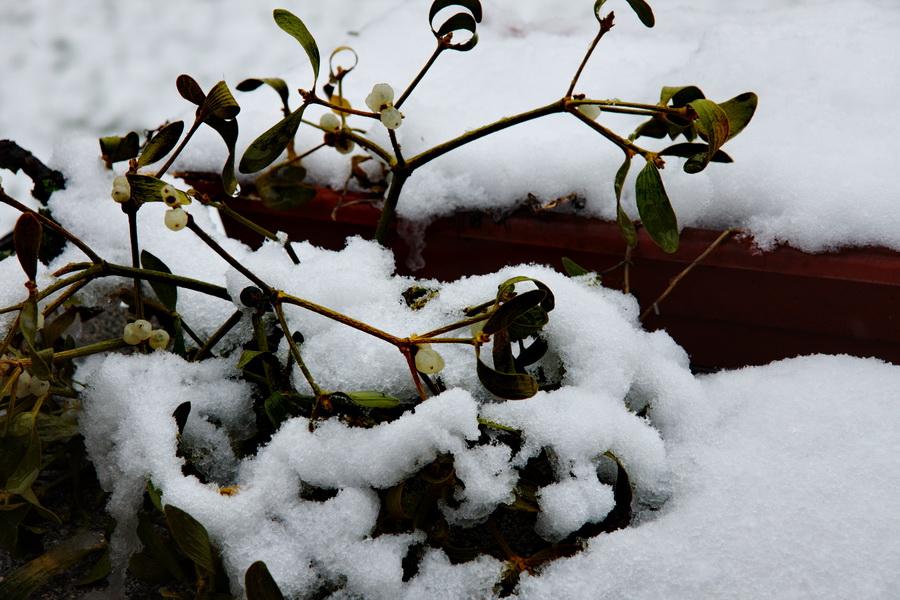 Neve di Marzo