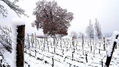 Neve in Franciacorta 1