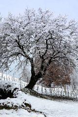 Neve in Franciacorta 2