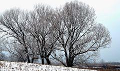 Neve in Franciacorta 7
