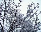 neve neve e ancora neve