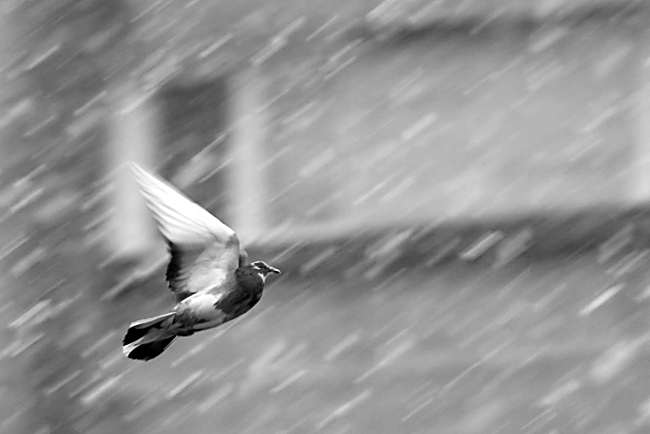 never tired, never sad... just keep on flying... photo & image ...