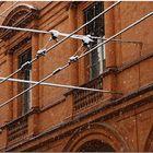 Nevicata alla bolognese III