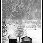 Nevicata BW
