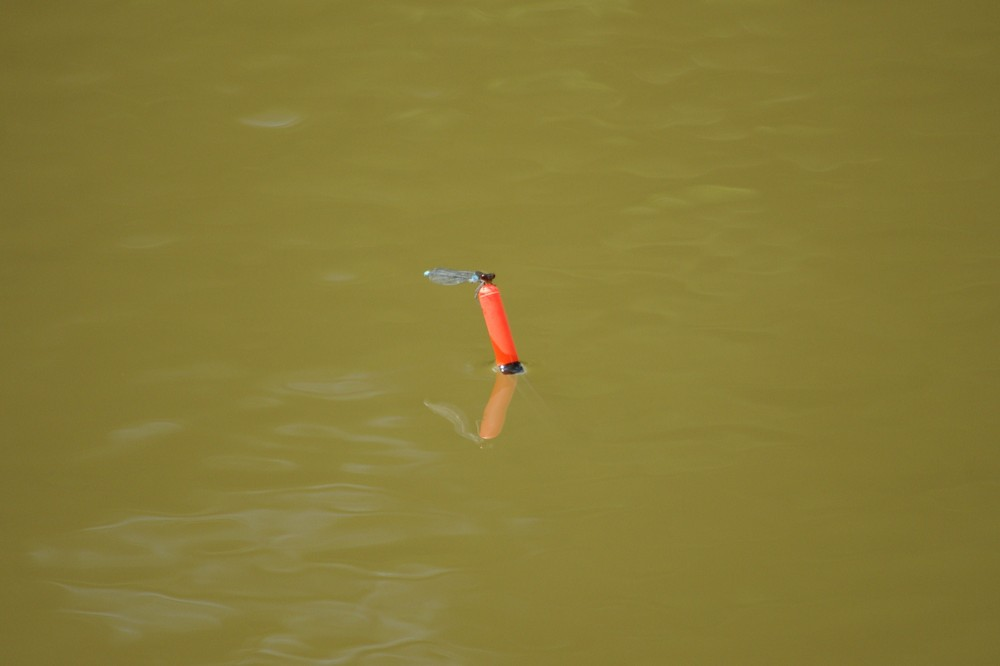 New freind when I went fishing
