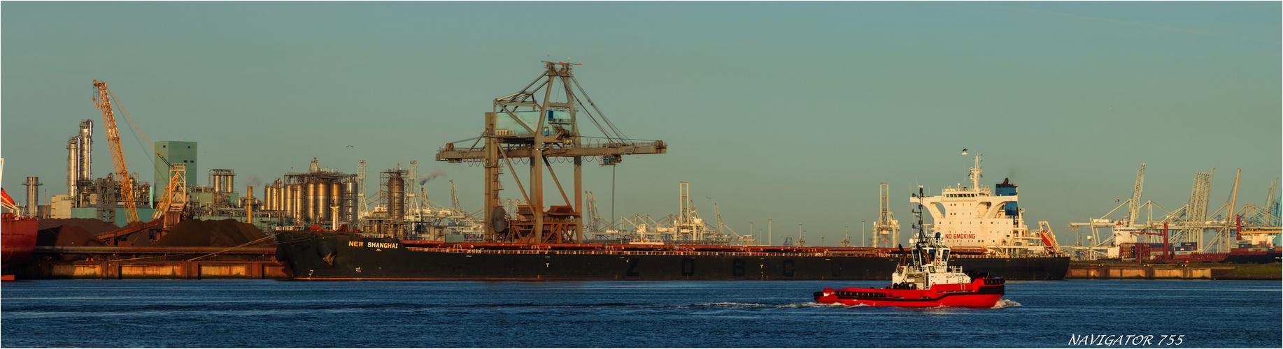 NEW SHANGHAI, Bulk Carrier, Rotterdam.