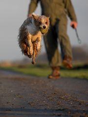 New Sports: Dog-Kicking