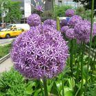 New York-City, 24.05.2011