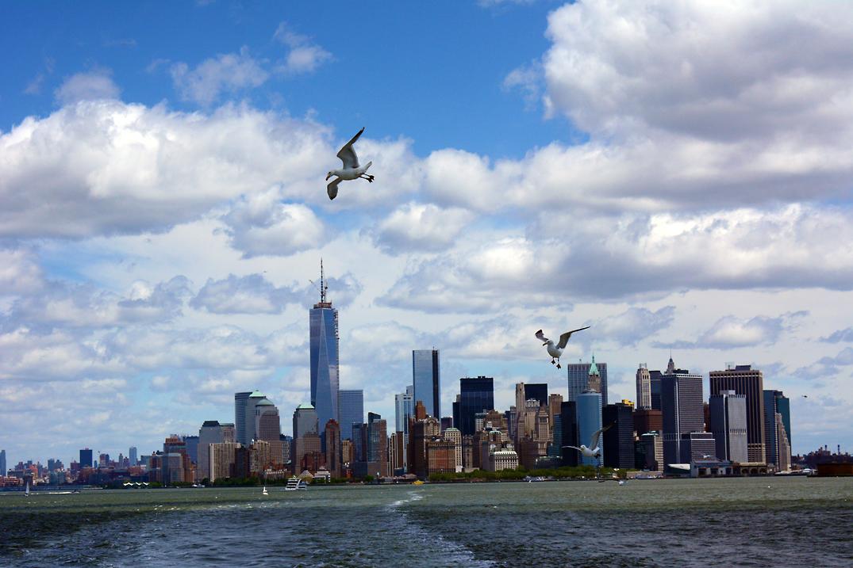 New Yorker Hafenmöven