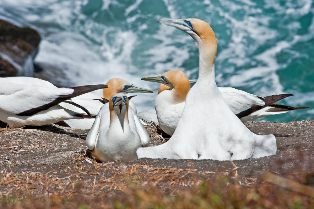 New Zealand Wildlife I