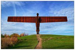 Newcastle #7