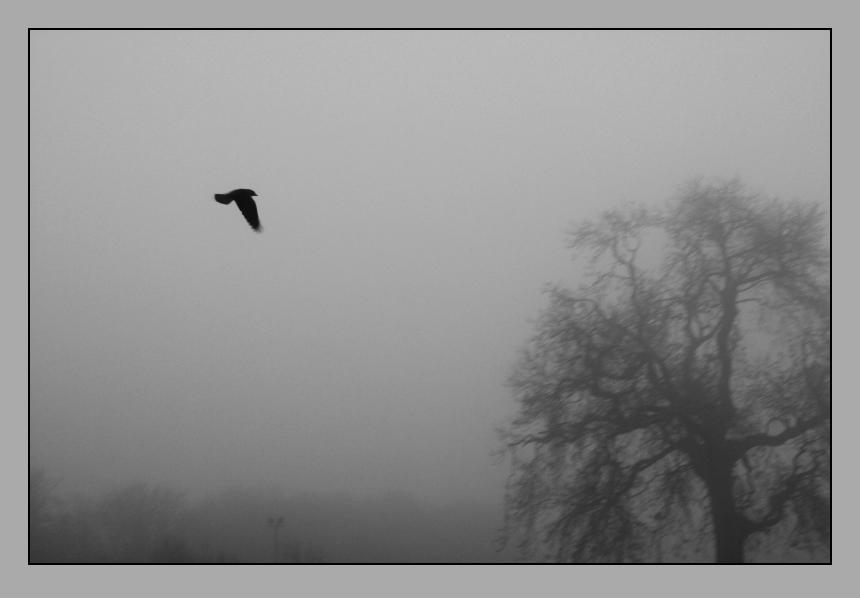 Newgrange Fog