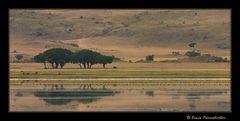 Ngorongoro 05