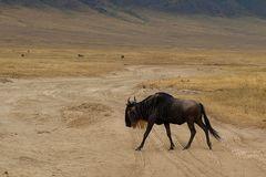 Ngorongoro - erste Begegnung