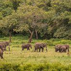 Ngorongoro Krater - Das Tierparadies....