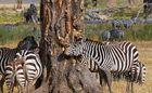 Ngorongoro Love Tree |