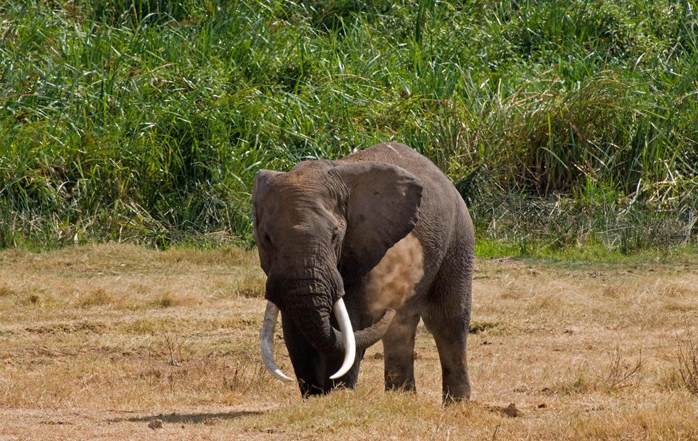 Ngorongoro Secrets ~ 10 ~