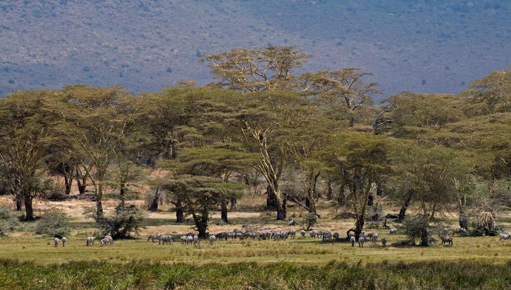 Ngorongoro Secrets ~ 9 ~