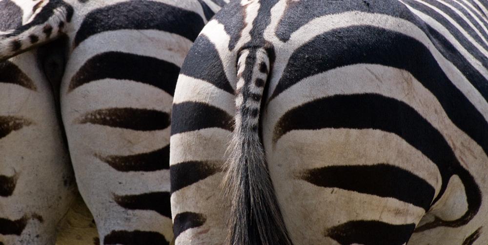 Ngorongoro Zebra Points