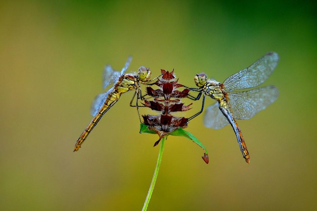 nice dragonfly