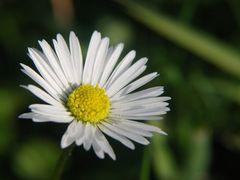Nice Flowers I