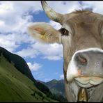 Nicht alle Kühe sind von Milka