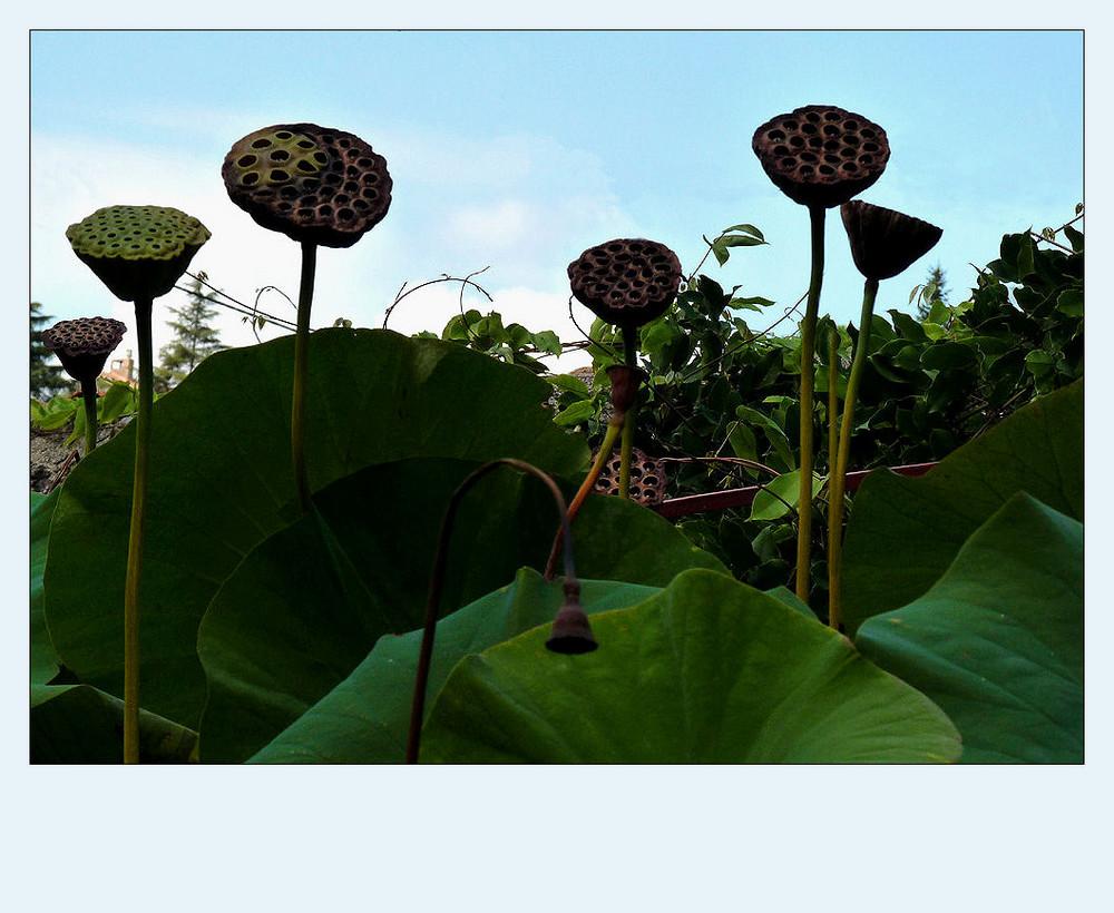 nicht den kopf h ngen lassen foto bild pflanzen pilze flechten bl ten. Black Bedroom Furniture Sets. Home Design Ideas