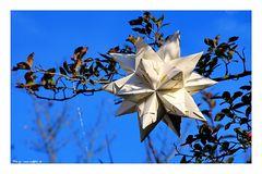 Nicht der Stern.....aber ein Stern