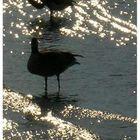 Nicht ist schoener als ein Sonnenbad im Wasser...