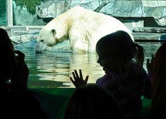 nicht Knut und nicht Flocke