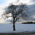 Nicht nur ein x beliebiger Baum
