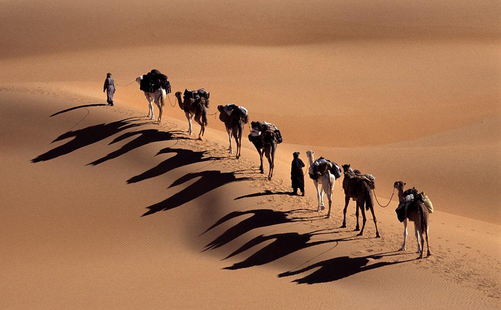 nicht nur Kamele werfen lange Schatten
