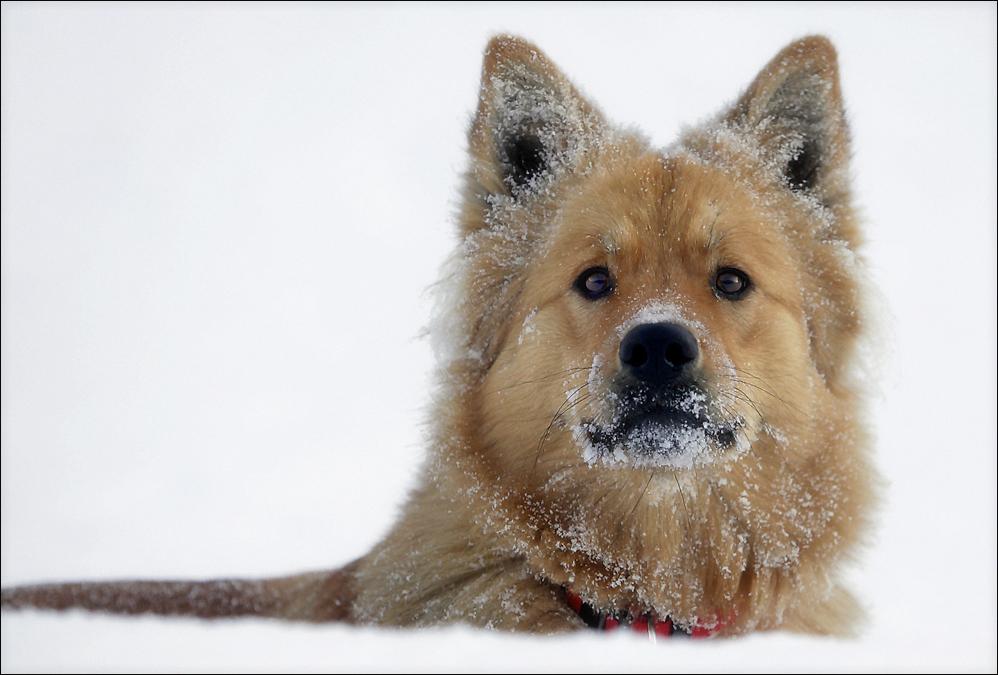 [ nicht nur kinder tollen gerne im schnee ... ]