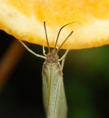 Nicht nur Schmetterlinge brauchen jetzt Vitamin C